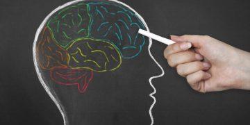 Beyin Lobları Kaç Adettir?