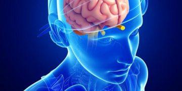 Hipofiz nedir? Ne işe yarar?